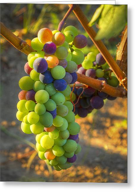 Purple Grapes Greeting Cards - Fading light Greeting Card by Jean Noren