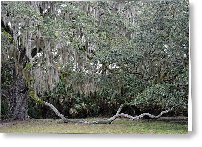 Bruce Photos Greeting Cards - Fairchild Oak Tree Bulow Creek Greeting Card by Bruce Gourley