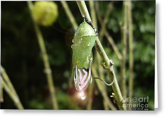 Bobbies Greeting Cards - Fairy Cocoon Greeting Card by Bobbie S Richardson