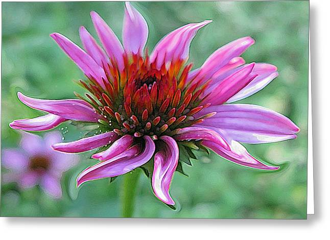 Abstracted Coneflowers Paintings Greeting Cards - Fairy Dust Greeting Card by Suzy Freeborg
