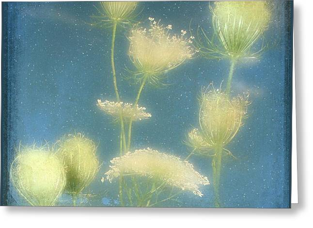 Soft Light Digital Art Greeting Cards - Fairy Dusted Greeting Card by Gothicolors Donna Snyder