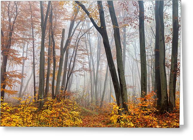 Bulgaria Greeting Cards - Fairy Forest Greeting Card by Evgeni Dinev