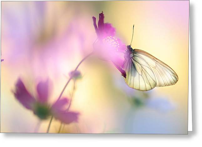 Flower Pink Fairy Child Photographs Greeting Cards - Fairy Light Greeting Card by Jenny Rainbow