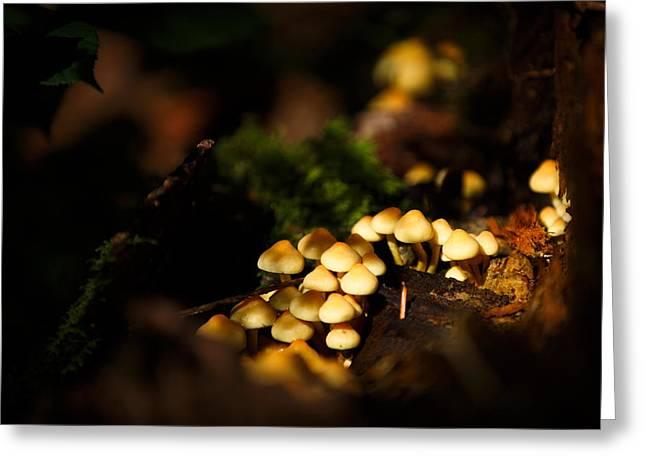 Dappled Light Greeting Cards - Fairy village fungi Greeting Card by Izzy Standbridge