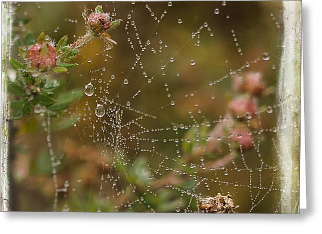 Dewdrops Digital Greeting Cards - Fairy Whispers - Nature Art Greeting Card by Jordan Blackstone