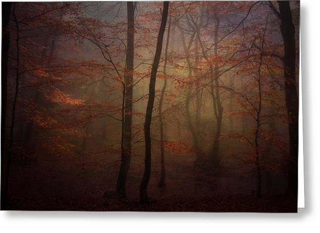 Rikard Olsson Greeting Cards - Fairys in the woods Greeting Card by Rikard Olsson