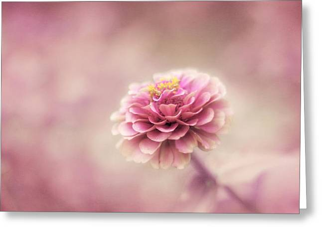 Flower Photos Greeting Cards - Fairytale Ending Greeting Card by Amy Tyler