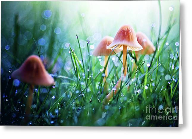 Dewdrops Greeting Cards - Fairytopia Greeting Card by Sylvia Cook