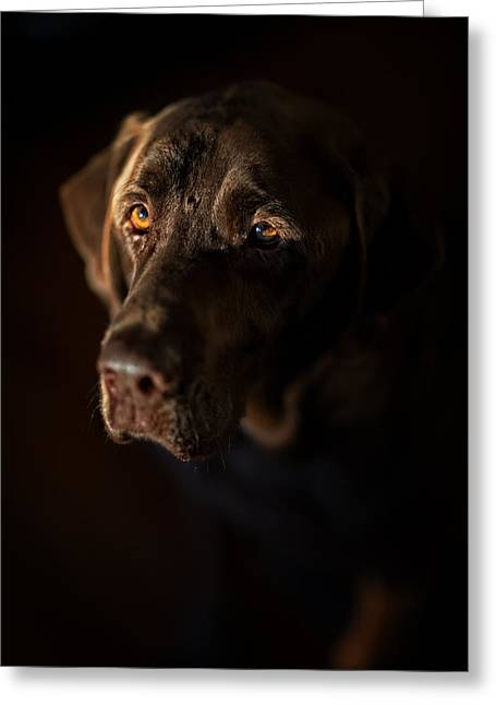 Chocolate Lab Greeting Cards - Faithful Friend Greeting Card by Bill Averette