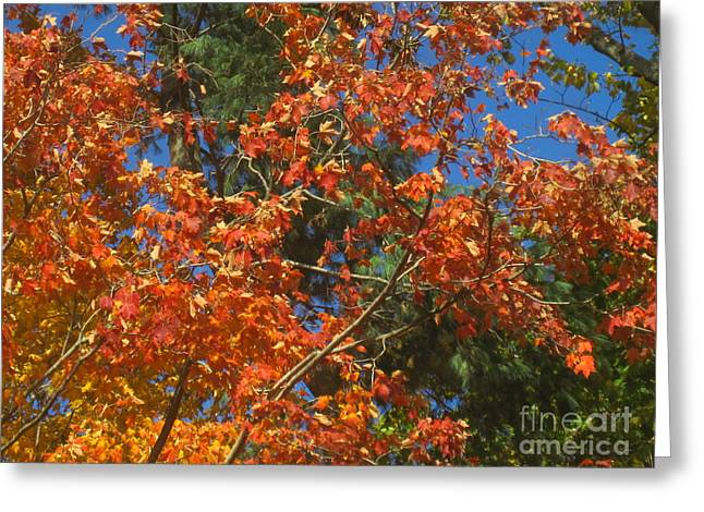Fall Photographs Drawings Greeting Cards - Fall Abstract 3 Greeting Card by Tara  Shalton