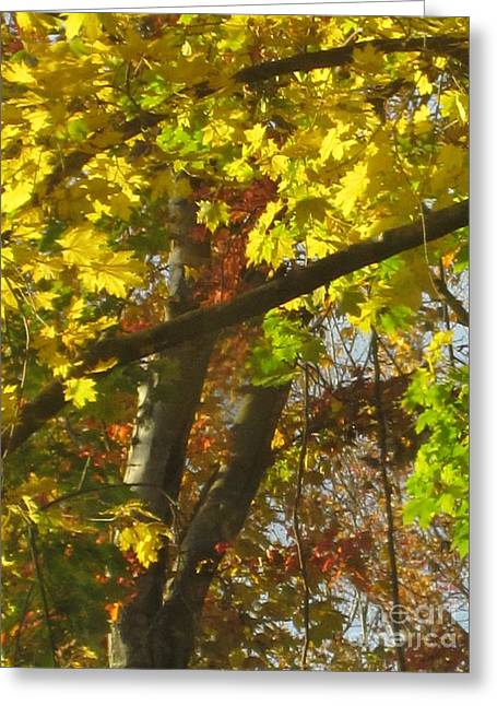Fall Photographs Drawings Greeting Cards - Fall Abstract Greeting Card by Tara  Shalton