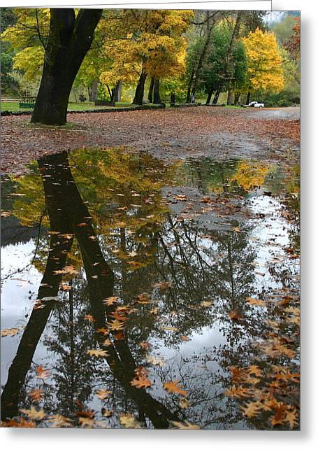 Marie Neder Greeting Cards - Fall all the way Greeting Card by Marie Neder