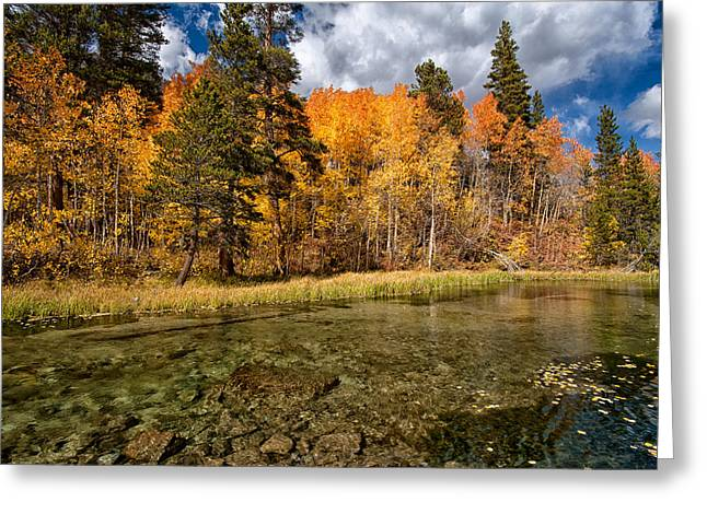 Fall Along Bishop Creek Greeting Card by Cat Connor
