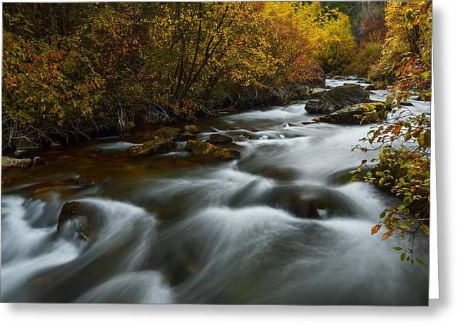Overcast Day Greeting Cards - Fall along Palisades creek Idaho Greeting Card by Vishwanath Bhat