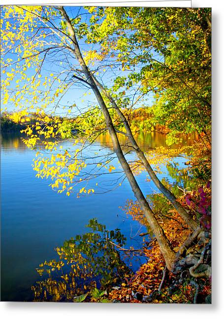 Gnarly Greeting Cards - Fall along the Lakeshore Greeting Card by Carolyn Derstine