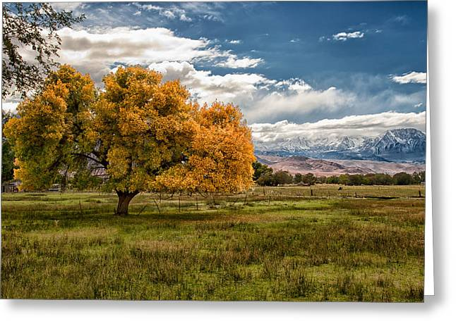 Eastern Sierra Greeting Cards - Fall and Winter Greeting Card by Cat Connor