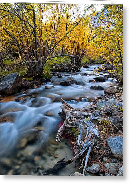 River Greeting Cards - Fall at Big Pine Creek Greeting Card by Cat Connor