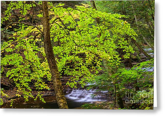 Buttermilk Falls Greeting Cards - Fall at Buttermilk Falls  Greeting Card by John Naegely