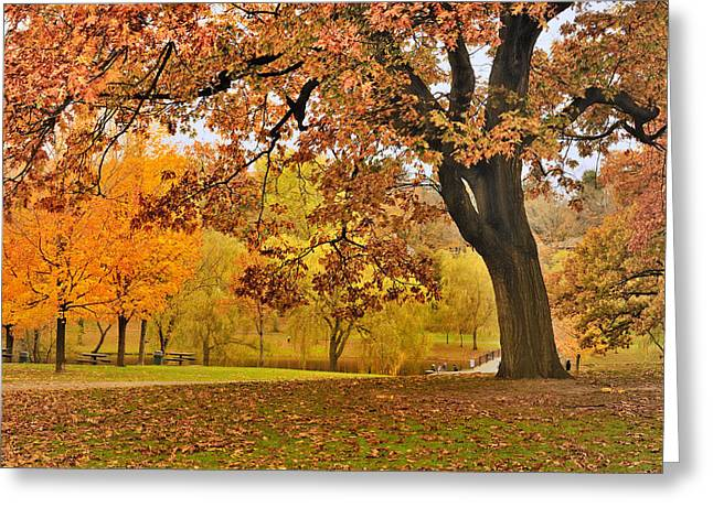 Boston Ma Greeting Cards - Fall at Larz Anderson Greeting Card by Ludmila Nayvelt