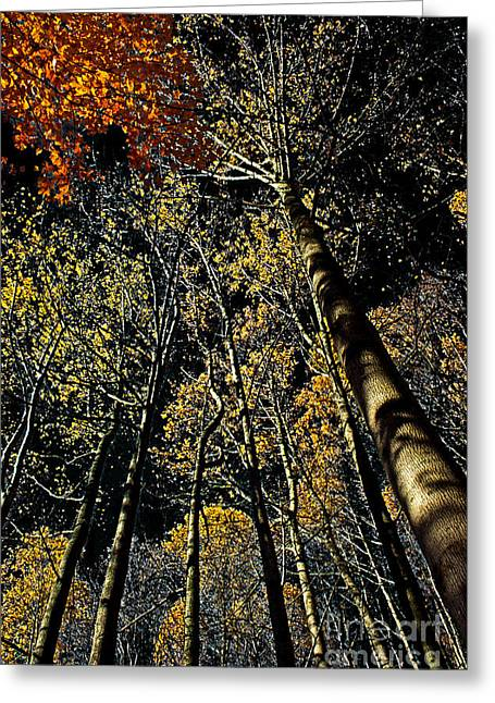 Interior Scene Greeting Cards - Fall at Night Greeting Card by Tom Gari Gallery-Three-Photography