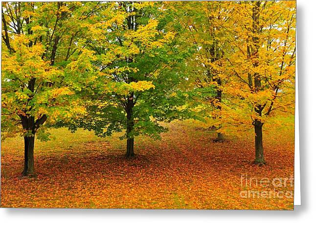 Autumn Trees Greeting Cards - Fall Beauties Greeting Card by Terri Gostola