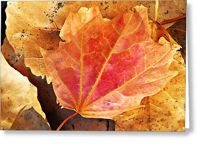 Yearly Greeting Cards - Fall Blush  Greeting Card by Chris Berry