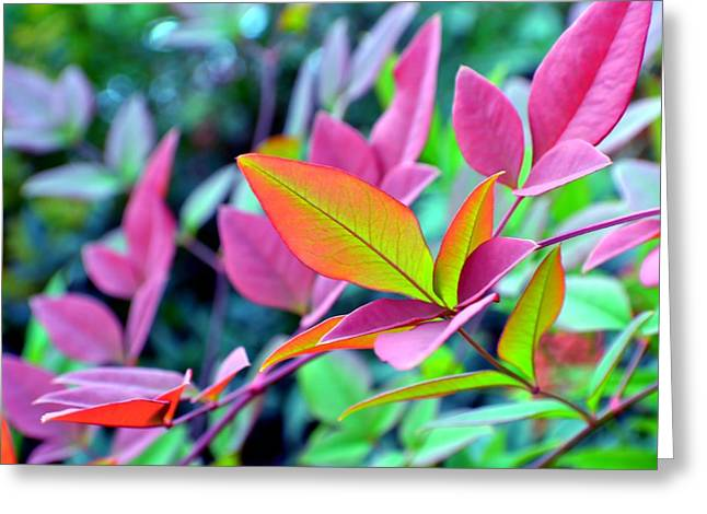 Fall Scenes Greeting Cards - Fall Brilliance Greeting Card by Deena Stoddard