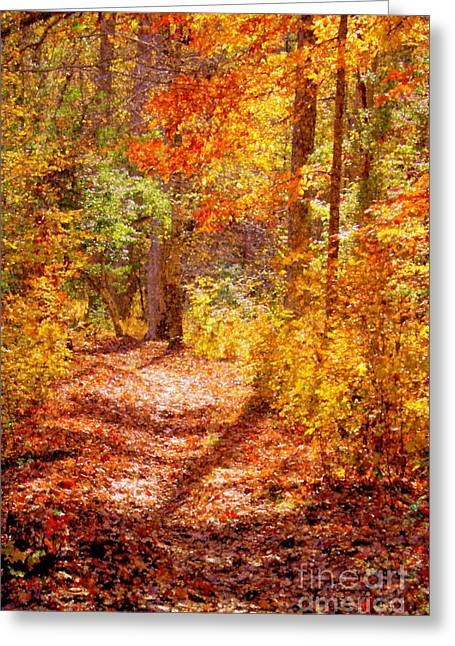 Orange County North Carolina Greeting Cards - Fall Canopy in Eno State Park Greeting Card by Sandra Clark