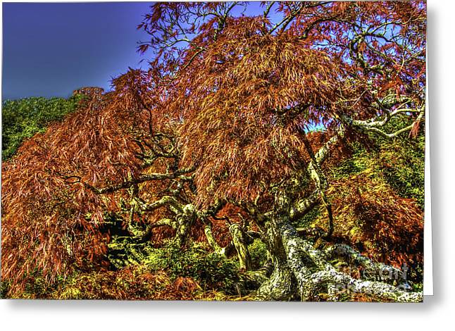 Nc Estate Greeting Cards - Fall Color at Biltmore Greeting Card by Dale Powell