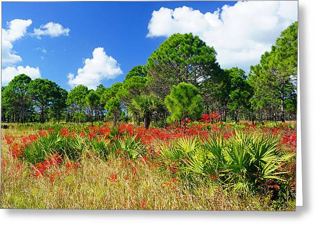 Oscar Scherer State Park Greeting Cards - Longleaf Pines Flatwoods Christmas Color Greeting Card by John Myers