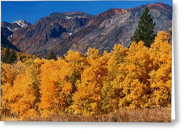 Dave Greeting Cards - Fall Color Eastern Sierras California Greeting Card by Dave Welling