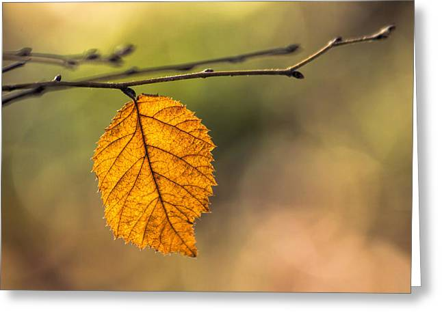 Christmas Greeting Greeting Cards - Leaf in Fall Color Greeting Card by Francis Sullivan