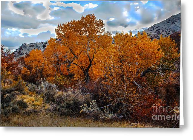 Peaceful Scenery Greeting Cards - Fall Color in the High Desert Greeting Card by Robert Bales