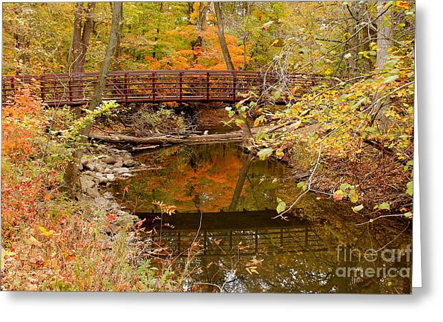 Indiana Autumn Greeting Cards - Fall Color Greeting Card by Lynne Dohner