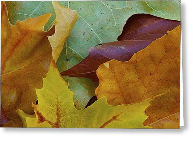 Abstract Water And Fall Leaves Greeting Cards - Fall color Greeting Card by Michael Blesius