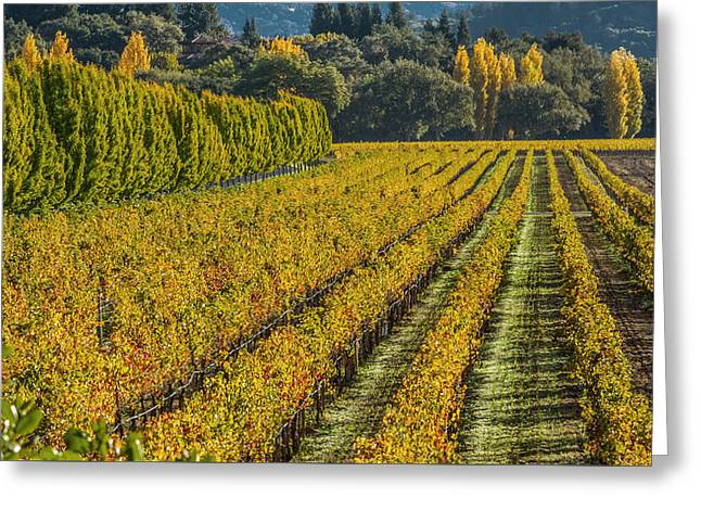 Napa Valley Vineyard Greeting Cards - Fall Color Napa Style Greeting Card by Bill Gallagher
