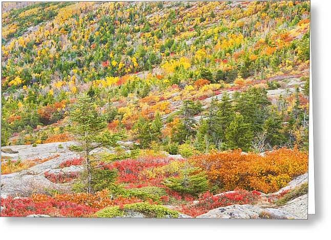 New England Wilderness Greeting Cards - Fall color on Cadillac Mountain Acadia National Park Maine Photo Greeting Card by Keith Webber Jr