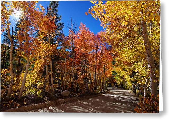 County Landscape Greeting Cards - Fall Color Sunburst Greeting Card by Scott McGuire