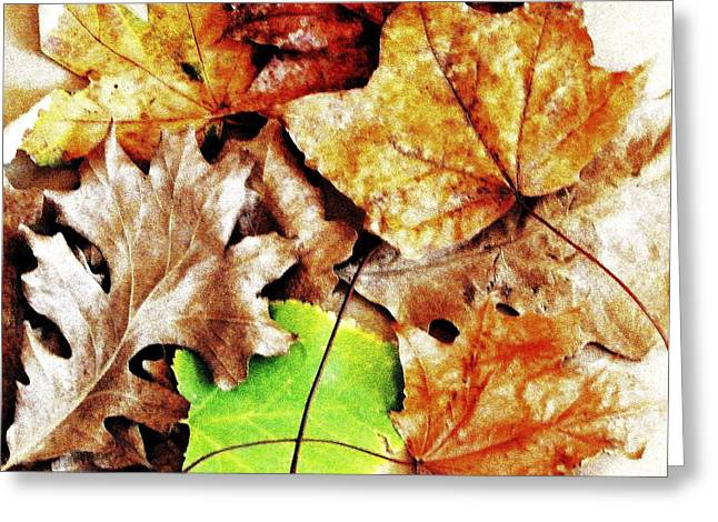 Elm Digital Art Greeting Cards - Fall Colored Leaves Greeting Card by Marsha Heiken
