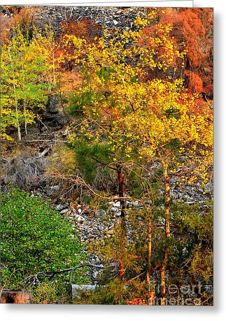 Surreal Landscape Greeting Cards - Fall Colors 13 Greeting Card by Newel Hunter