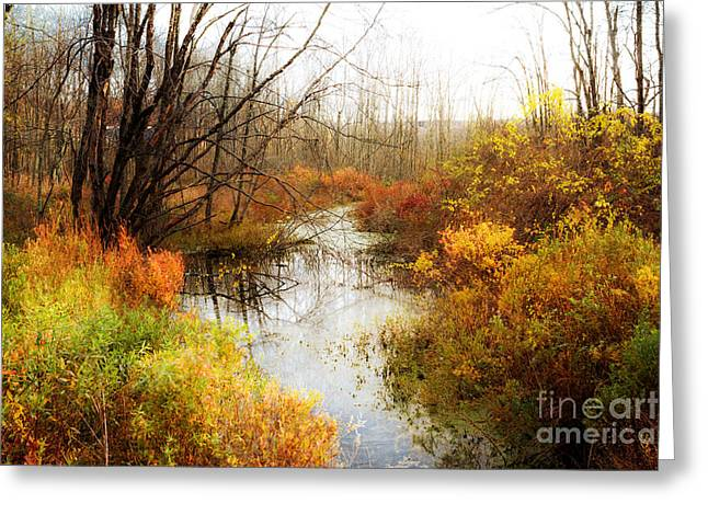 Fall Colors  Greeting Card by A New Focus Photography