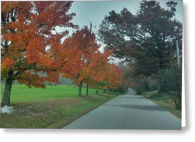 Cane Creek Greeting Cards - Fall Colors Along Cane Creek Greeting Card by Dave Sieg