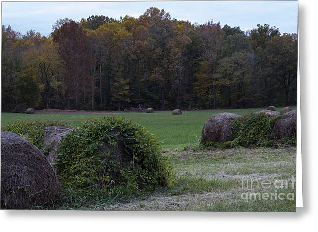 Western Ky Greeting Cards - Fall Colors Greeting Card by Amber Kresge