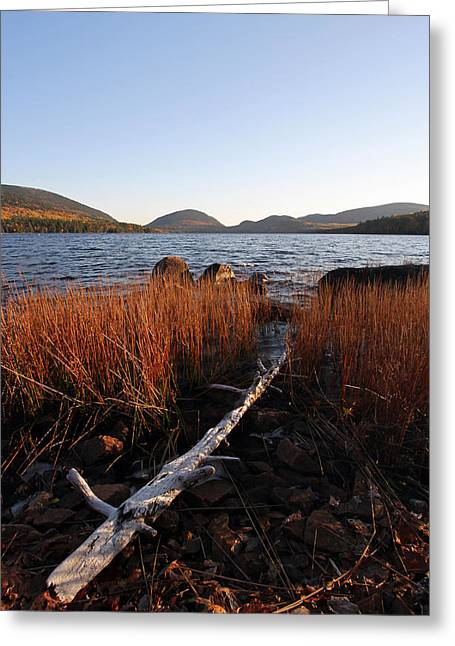 Haut Greeting Cards - Fall Colors at Eagle Lake in Maine Greeting Card by Juergen Roth