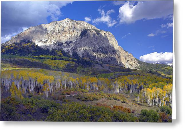 Photos Of Autumn Greeting Cards - Fall Colors At Gunnison National Forest Greeting Card by Tim Fitzharris