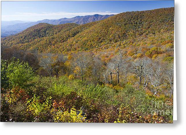 Fall Trees Greeting Cards - Fall Colors Blue Ridge Parkway NC Greeting Card by Dustin K Ryan