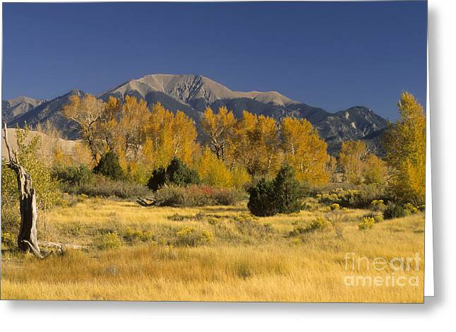 Great Sand Dunes National Preserve Greeting Cards - Fall Colors, Colorado Greeting Card by Richard and Ellen Thane