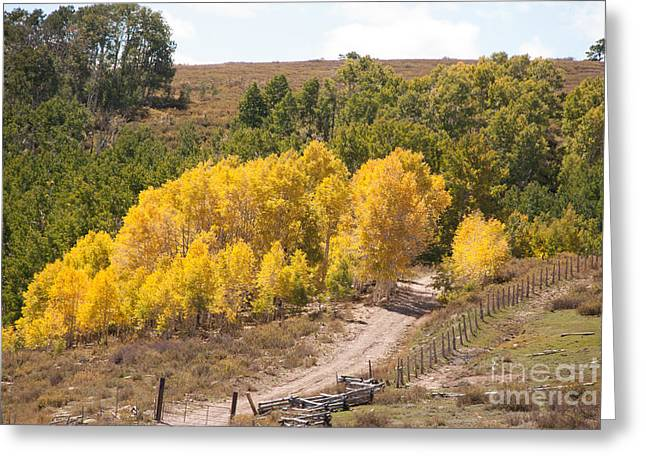 Geobob Greeting Cards - Fall colors in high pastures Markagunt Plateau Utah Greeting Card by Robert Ford