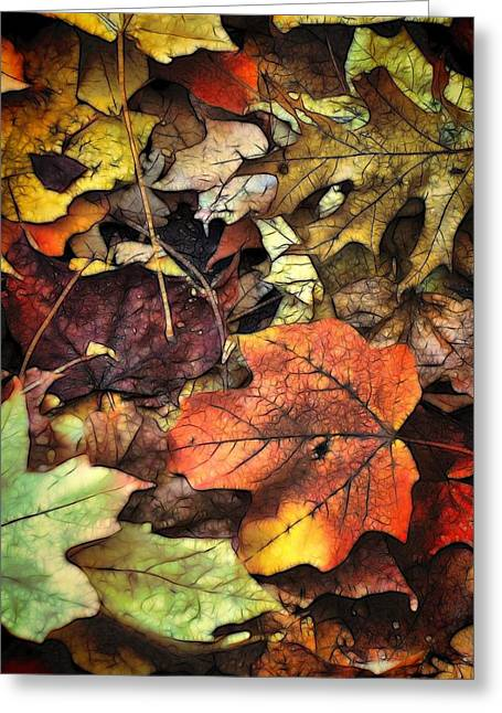 Lyle Hatch Greeting Cards - Fall Colors Greeting Card by Lyle Hatch