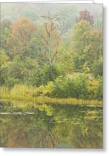 Fall Colors Greeting Cards - Fall Colors on Small Pond In Vienna Maine Greeting Card by Keith Webber Jr